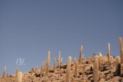 Pkl Fotografia-fotografia-de-bodas-salar de uyuni-Bolivia050