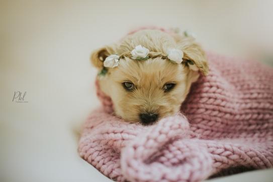 Pkl-fotografia-puppy photography-fotografia mascotas-bolivia-cachorros-01