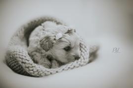 Pkl-fotografia-puppy photography-fotografia mascotas-bolivia-cachorros-02
