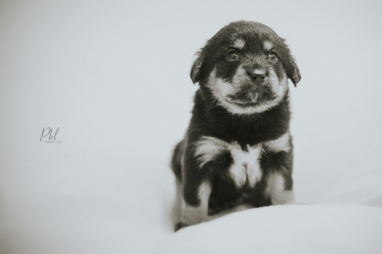 Pkl-fotografia-puppy photography-fotografia mascotas-bolivia-cachorros-04