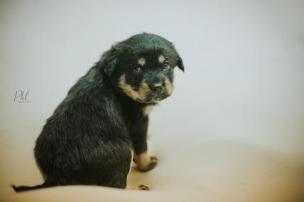 Pkl-fotografia-puppy photography-fotografia mascotas-bolivia-cachorros-05