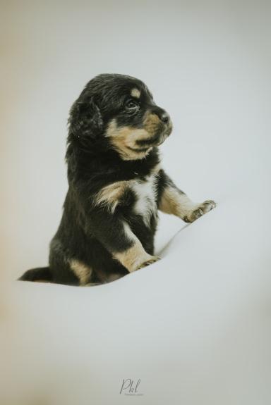 Pkl-fotografia-puppy photography-fotografia mascotas-bolivia-cachorros-06