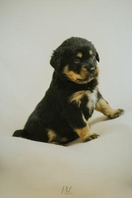 Pkl-fotografia-puppy photography-fotografia mascotas-bolivia-cachorros-07