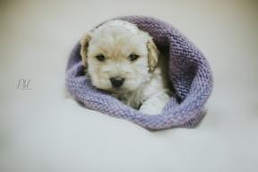 Pkl-fotografia-puppy photography-fotografia mascotas-bolivia-cachorros-09