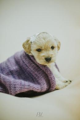 Pkl-fotografia-puppy photography-fotografia mascotas-bolivia-cachorros-10