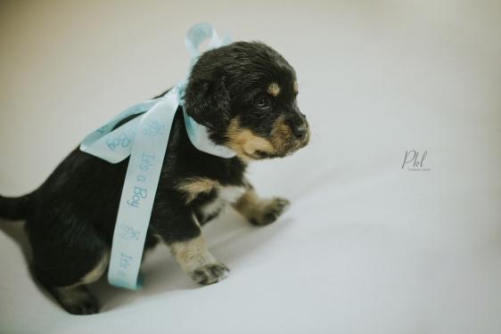 Pkl-fotografia-puppy photography-fotografia mascotas-bolivia-cachorros-11