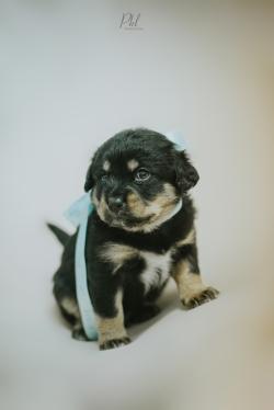 Pkl-fotografia-puppy photography-fotografia mascotas-bolivia-cachorros-12