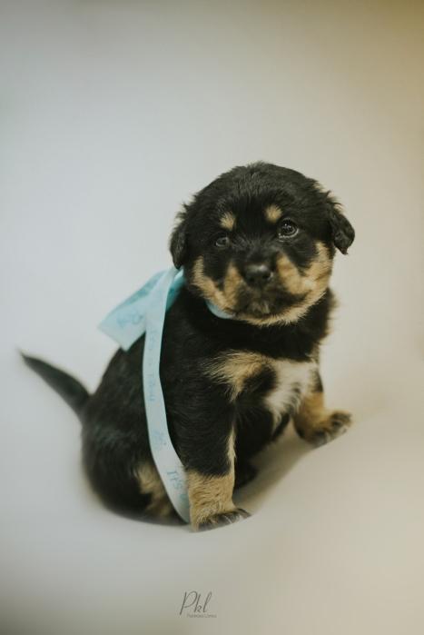 Pkl-fotografia-puppy photography-fotografia mascotas-bolivia-cachorros-13