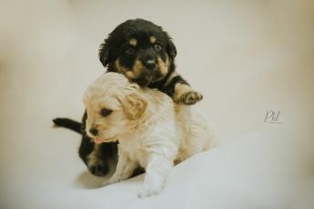Pkl-fotografia-puppy photography-fotografia mascotas-bolivia-cachorros-14