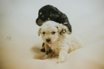 Pkl-fotografia-puppy photography-fotografia mascotas-bolivia-cachorros-16
