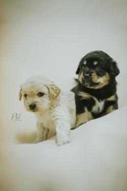 Pkl-fotografia-puppy photography-fotografia mascotas-bolivia-cachorros-17