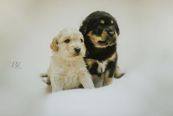 Pkl-fotografia-puppy photography-fotografia mascotas-bolivia-cachorros-18